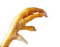 Chicken feet Stock Photography
