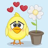 Chicken and flower Royalty Free Stock Photo