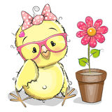 Chicken with flower Stock Photography