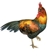 Chicken on a foot. 3D rendering of a male chicken standing on one foot Stock Image