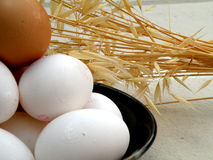 Chicken fresh eggs Stock Image