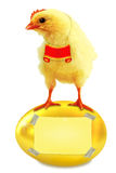 Chicken and gold egg. Royalty Free Stock Photography