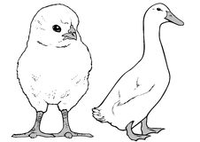 Chicken and goose Royalty Free Stock Photography