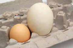 Chicken and Goose Eggs Stock Images