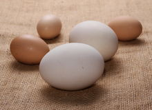 Chicken and goose eggs on jute Royalty Free Stock Photography