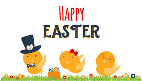 Chicken greeting card. Happy Easter cartoon design with cute chicks and grass isolated on white background. Royalty Free Stock Image