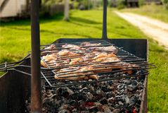Chicken grill in summer day Royalty Free Stock Images