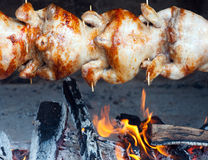 Chicken-grilled. Stock Photos