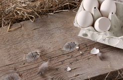 The chicken has hatched ... Stock Photography