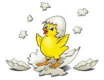Chicken Hatching Royalty Free Stock Images