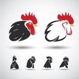 Chicken head Stock Image