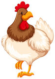 Chicken. Healthy chicken on white background Royalty Free Stock Images