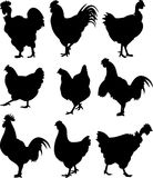 Chicken, hen, cock - silhouettes Stock Photo