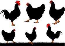 Chicken - hen and cock Stock Photos