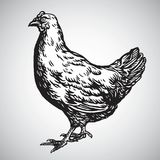 Chicken Hen Drawing Illustration Vector. Icon stock illustration