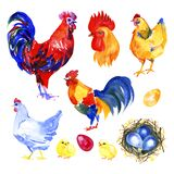 Chicken, hen, rooster, egg . Watercolor painting element isolated on white background.
