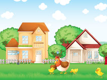 The chicken and her little chicks Royalty Free Stock Photo