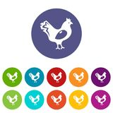 Chicken icons set vector color. Chicken icons color set vector for any web design on white background Stock Photography