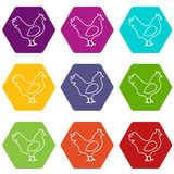Chicken icons set 9 vector. Chicken icons 9 set coloful isolated on white for web Royalty Free Stock Photography