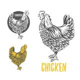 Chicken. illustration, design elements for the chicken manufacturing. royalty free illustration