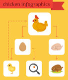 Chicken infographics Royalty Free Stock Photography