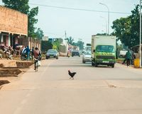 Chicken, Jinja Uganda Source of the Nile River royalty free stock image