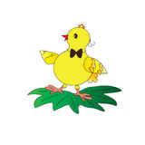 Chicken. Little yellow chick on white background Royalty Free Stock Photos