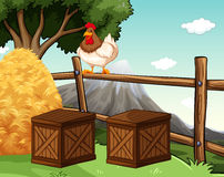 Chicken living on the farm Royalty Free Stock Photo