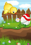 Chicken looks at Easter Egg. Chicken sitting on a wooden fence and looking down on the painted Easter egg. Easter scene Royalty Free Stock Photos