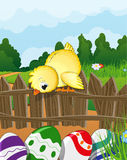 Chicken looks at Easter Eggs. Chicken sitting on a wooden fence and looking down on the painted Easter eggs. Green meadow with flowers and forest in the Royalty Free Stock Photos