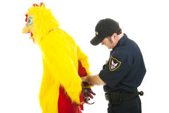 Chicken Man Under Arrest. Chicken man being handcuffed by a police officer.  Isolated on white Stock Images