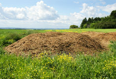 Chicken manure heap. Agriculture concept: Chicken dung hill or manure heap dumped in the field ready to be spread out, great compost plant fertilizer Royalty Free Stock Photo
