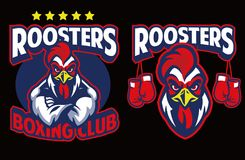 Chicken mascot of boxing club. Vector of Chicken mascot of boxing club Stock Images