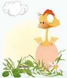 Chicken on a meadow Royalty Free Stock Photo