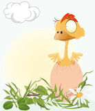 Chicken on a meadow Stock Image