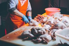Chicken meat production. Poultary processing in food industry. meat production stock photography