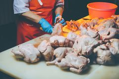 Chicken meat production. Poultary processing in food industry. meat production royalty free stock image