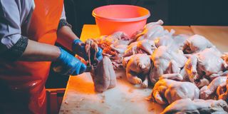 Chicken meat production. Poultary processing in food industry. meat production royalty free stock images