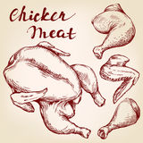 Chicken meat set hand drawn vector realistic sketch Royalty Free Stock Image