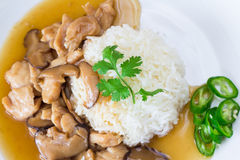 Chicken and mushroom with sauce over rice Royalty Free Stock Images