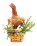 Chicken near the basket. Royalty Free Stock Photos