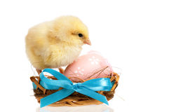 Chicken in nest with Easter eggs stock photo