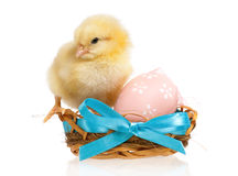 Chicken in nest with Easter eggs royalty free stock photography