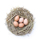 Chicken nest stock image