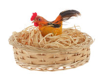 Chicken nest Royalty Free Stock Photo