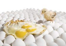 Chicken nestling Stock Photos