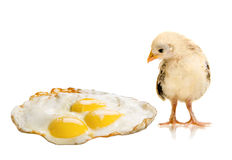 Chicken nestling Stock Image
