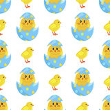 Chicken and Newborn Chick Hatch from Shell Vector. Colorful fluffy spring yellow chicken and newborn chick hatched from shell  on white background. Mascots of Royalty Free Stock Photo