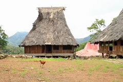 Chicken in open-air museum in Wologai Stock Image