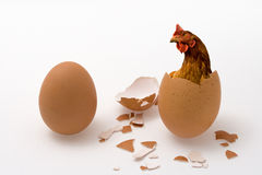 Chicken Or Egg On White, Philosopher Question, Hen Or Eggs Stock Photography